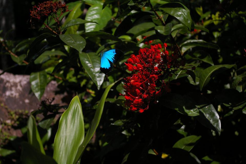 Daintree Rainforest 3.5